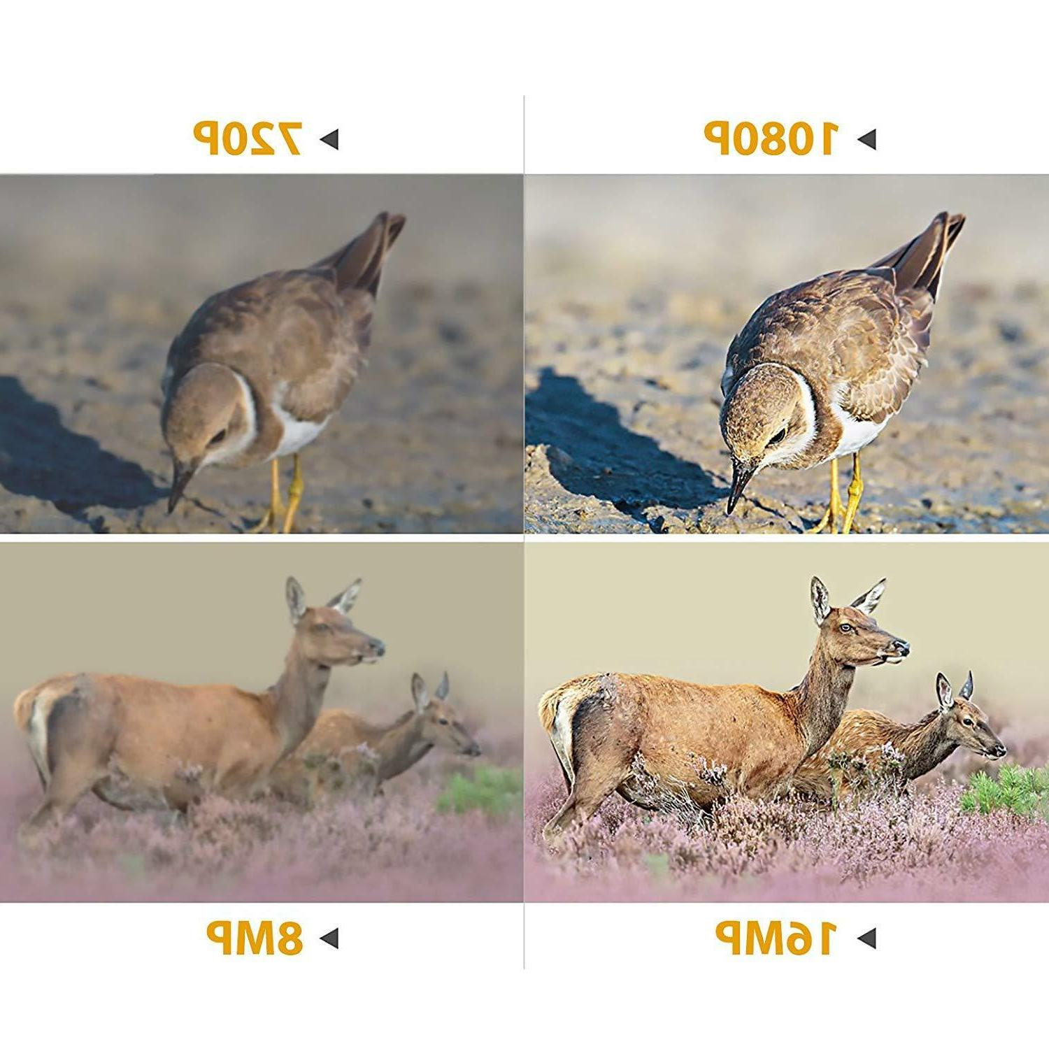 Wildlife 16MP Infrared Vision Hunting