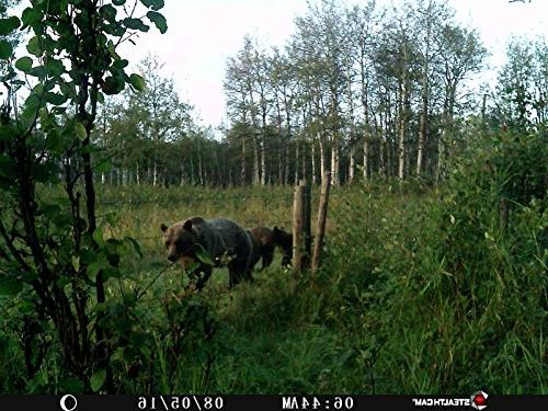 Stealth Cam PX Game