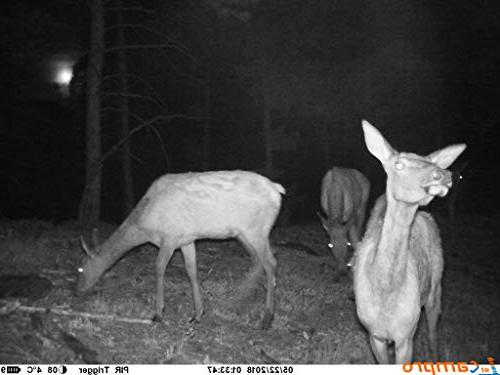 Camera, 12MP HD Wildlife Scouting Camera Vision