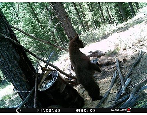 Stealth Cam Series Game ,