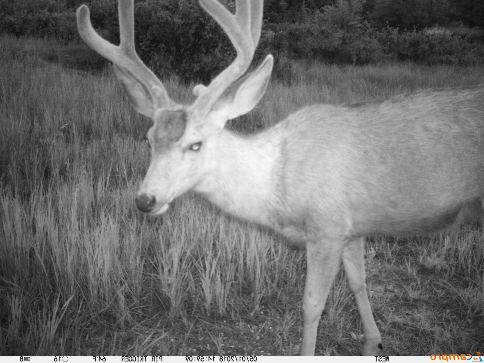 1stCamPro 12 MP Trail Camera Hunting and Security 16GB