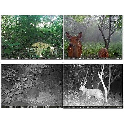 TEC.BEAN Game Trail Camera Scouting