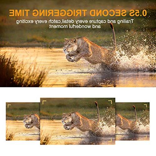 """AlfaView 1080P Wildlife Hunting Camera Activated Vision Cam 2.4"""" LCD Display Waterproof Design for Wildlife Hunting and Home"""