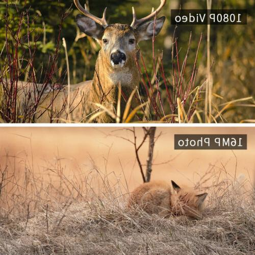 2 Wildlife 16MP 1080P Trail Scouting Cam